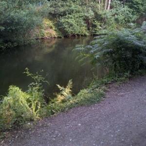 typical fishing swim Basingstoke canal