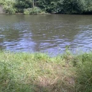 swim on Walton Lane