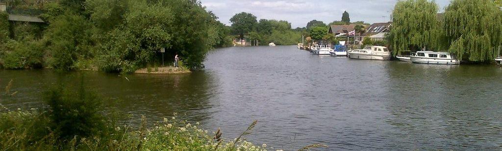 Free Thames angling: Walton Lane