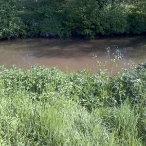 A fishing swim on the Broadmead Cut
