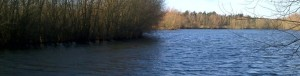 A view across Thorpe Lea fishing lake in winter sunshine. The water is choppy and the tree lined edge of an island is visible to the left.