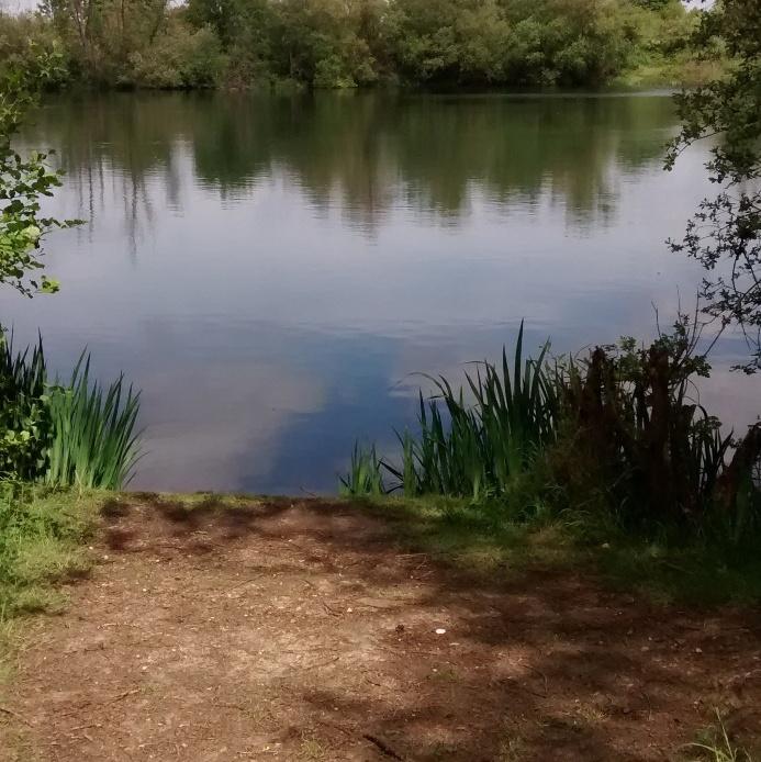 A shot of a fishing swim at Sheep Walk small lake in the summer.