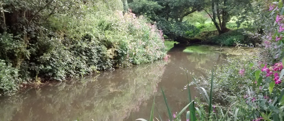 summer view of the upper Wey at Tilford