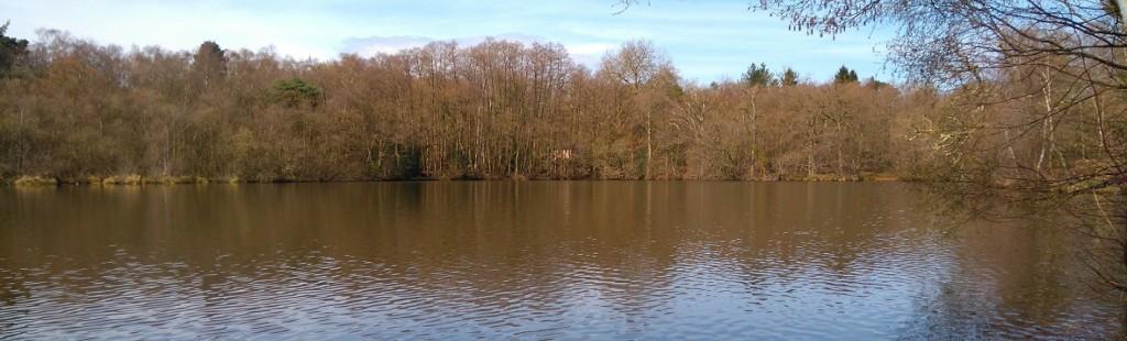 A view of Tarn Pond near Puttenham