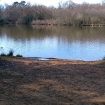 A fishing swim at Tarn Pond in Surrey