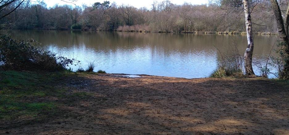 A fishing swim at Tarn Pond in Surrey