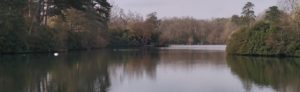A view of a fishing venue in Berkshire. A large lake.
