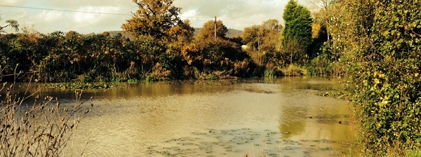 A view of a small lake controlled by a Surrey fishing club on an autumn afternoon.
